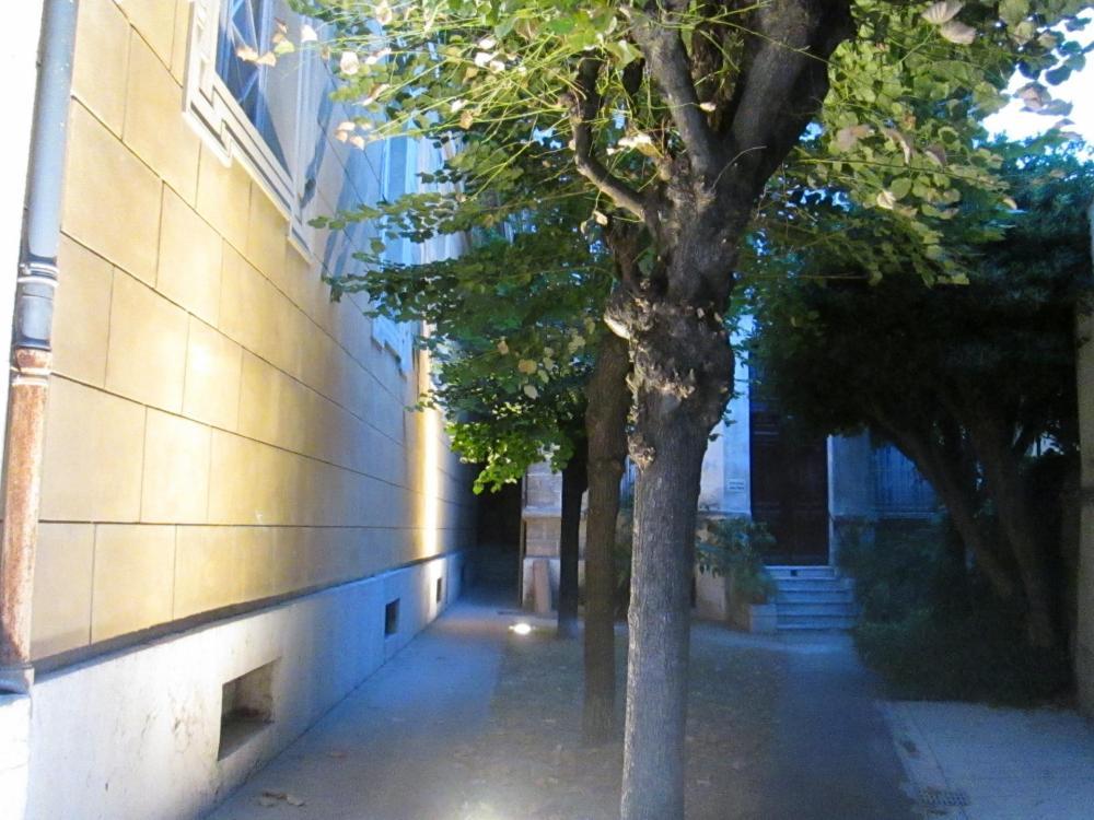 Puutarha yöllä